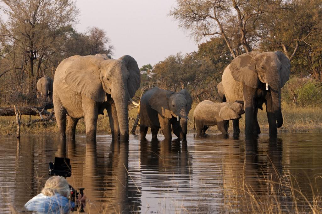 Filmmaker Dereck Joubert (left foreground) filming a herd of elephants from the water in Botswana. Beverly Joubert/© Wildlife Films